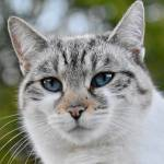 Katten Profile Picture