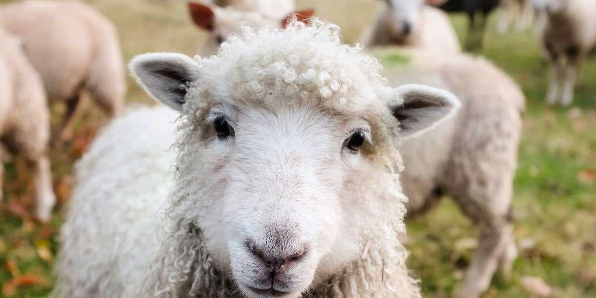 Wees een nieuwsgierig schaap!