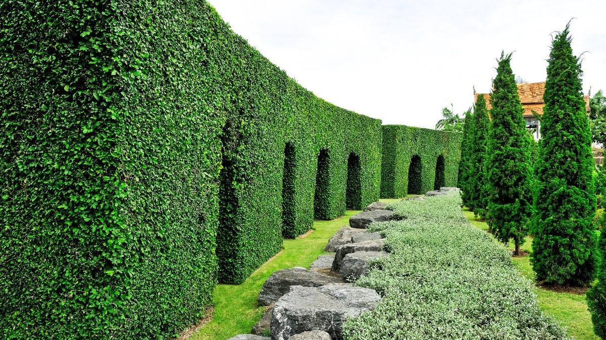 Welke haag planten voor een natuurlijke tuinafsluiting?
