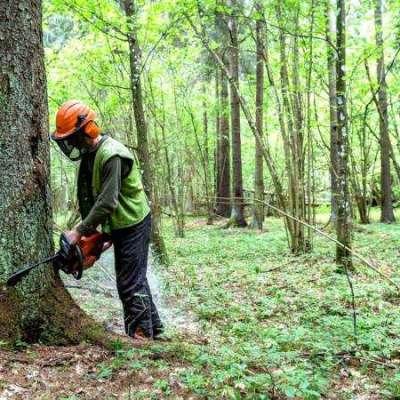 Wiebes 2 BioMassa geschikt bos Profile Picture