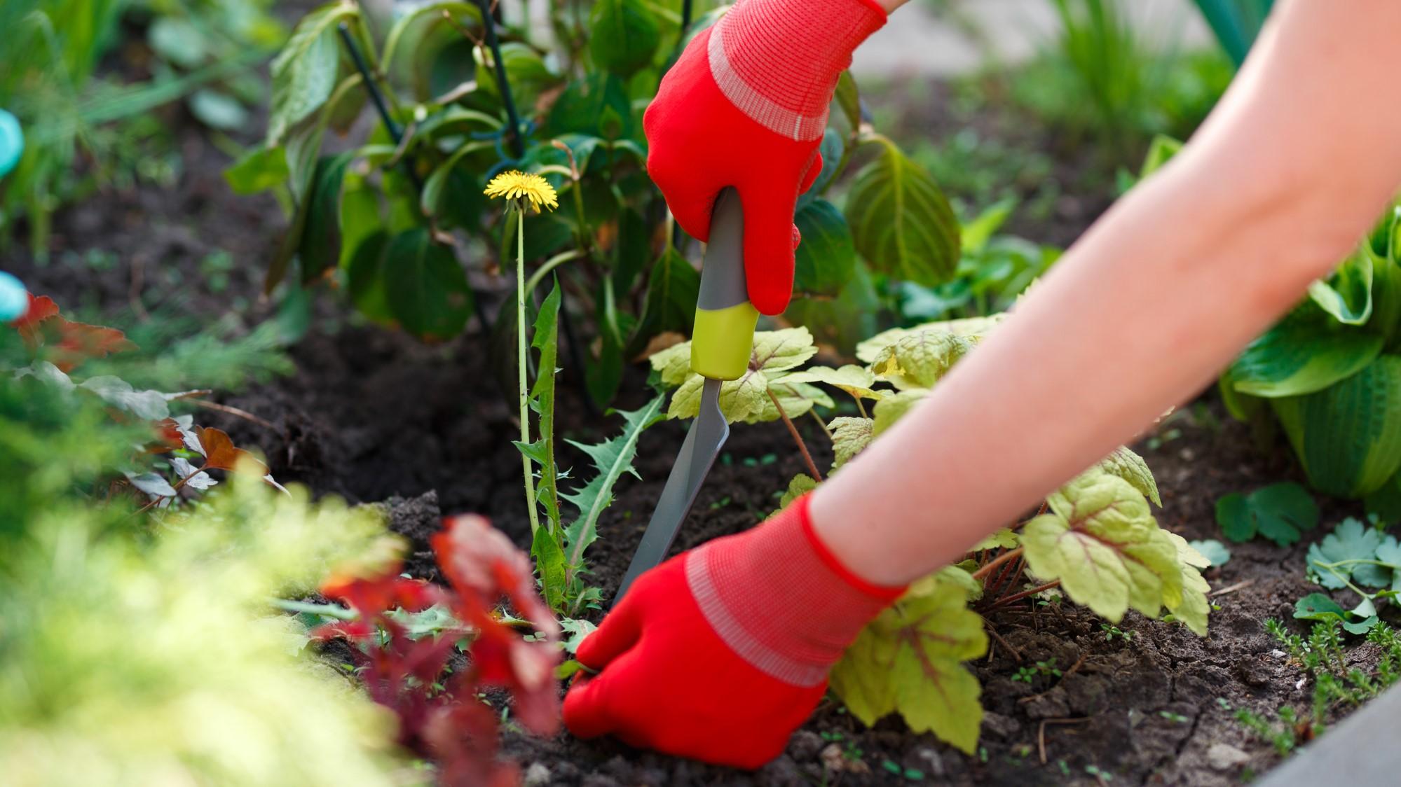 Natuurlijke onkruidverdelgers voor een mooie tuin zonder onkruid - Artikel.nl